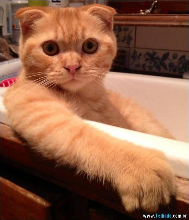 gatos-que-nao-tem-medo-de-agua-10