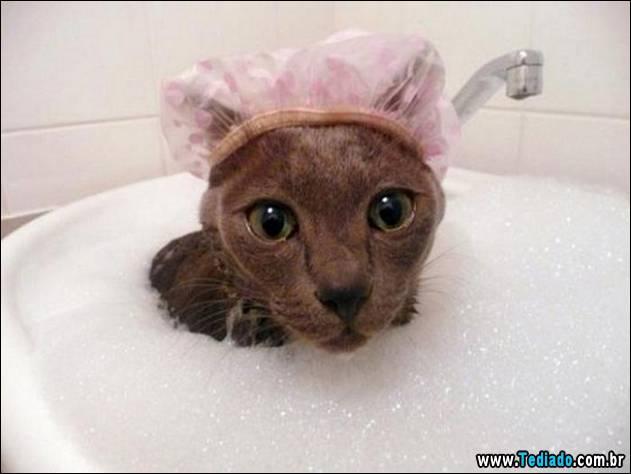 gatos-que-nao-tem-medo-de-agua-13