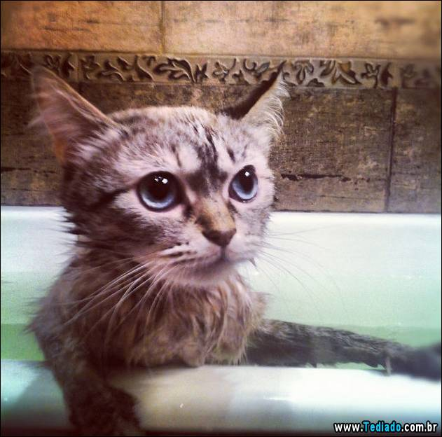 gatos-que-nao-tem-medo-de-agua-15