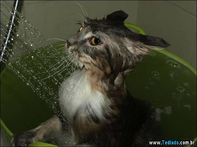 gatos-que-nao-tem-medo-de-agua-19