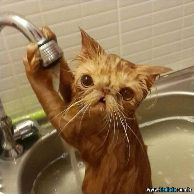 gatos-que-nao-tem-medo-de-agua-20