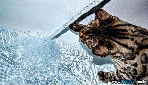 gatos-que-nao-tem-medo-de-agua-23