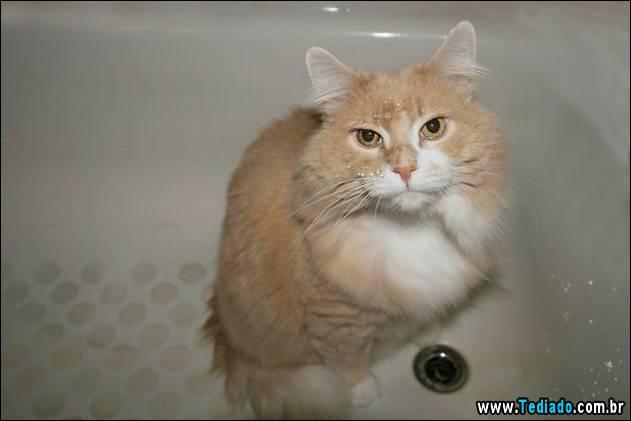 gatos-que-nao-tem-medo-de-agua-24
