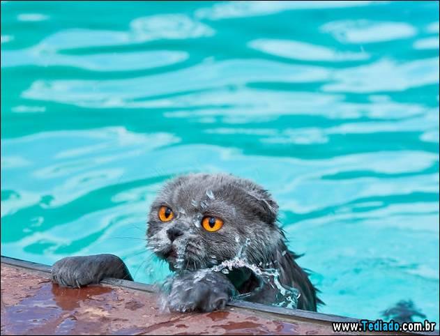 gatos-que-nao-tem-medo-de-agua-25