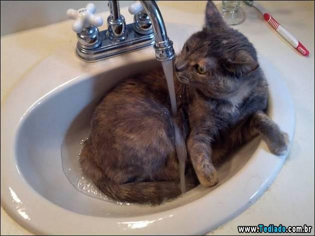 gatos-que-nao-tem-medo-de-agua-29