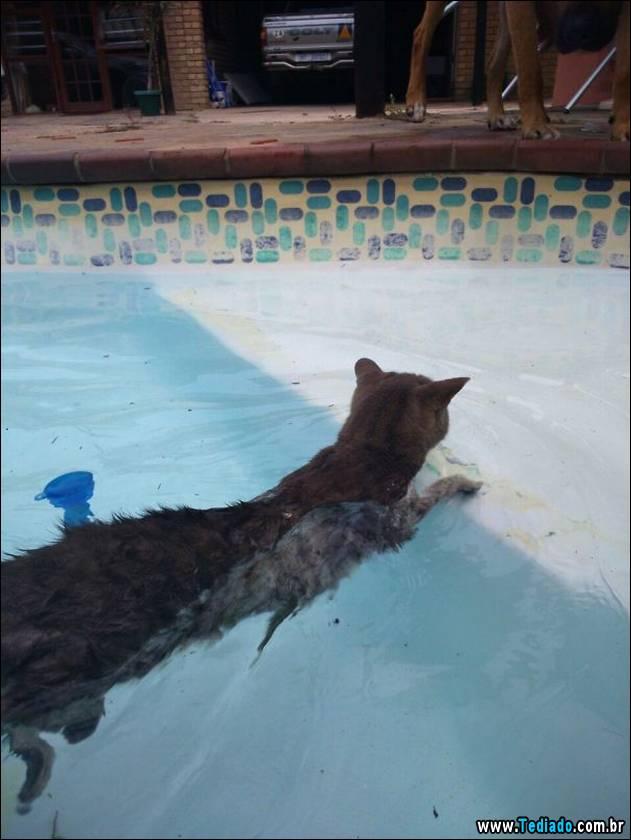 gatos-que-nao-tem-medo-de-agua-35