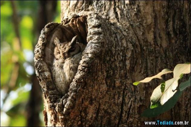 imagens-que-mostra-natureza-05