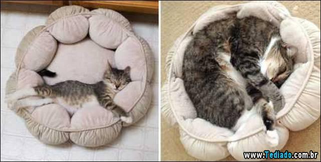 antes-e-depois-gatos-01