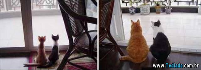antes-e-depois-gatos-02