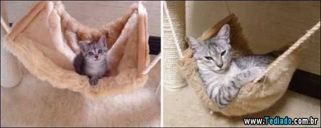 antes-e-depois-gatos-03