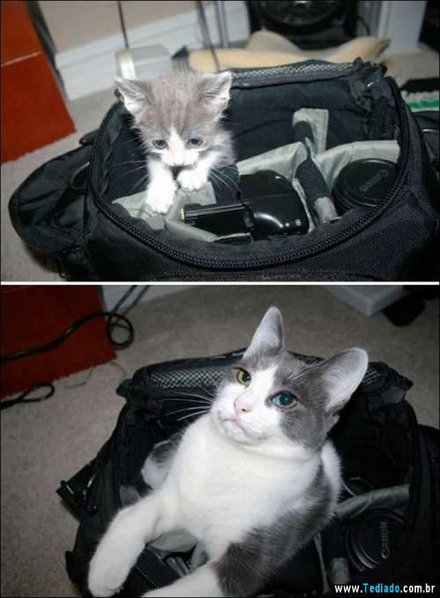 antes-e-depois-gatos-06
