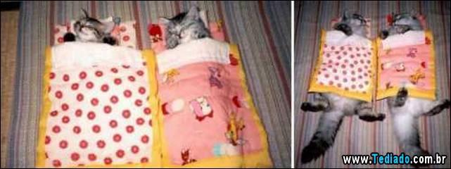antes-e-depois-gatos-08