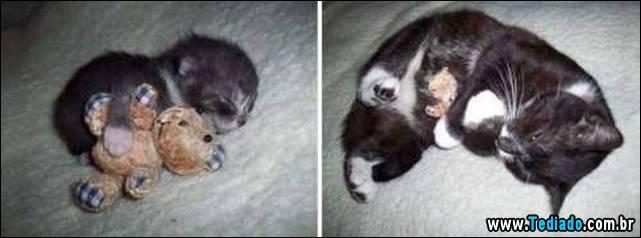 antes-e-depois-gatos-09