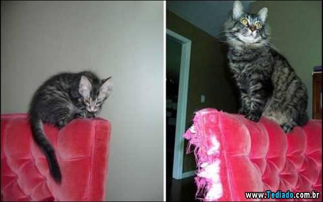 antes-e-depois-gatos-12