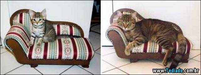 antes-e-depois-gatos-14