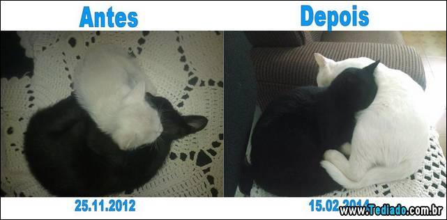 antes-e-depois-gatos-15