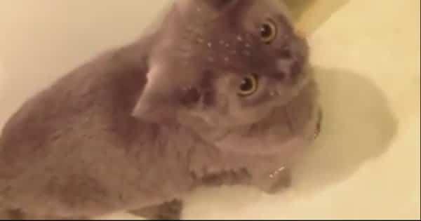 gato-e-peixe