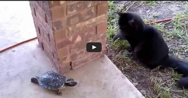 Um gato e uma tartaruga 3