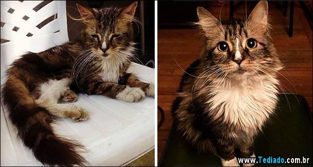 gatos-antes-e-depois-01