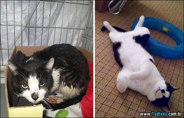 gatos-antes-e-depois-03