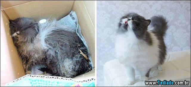 gatos-antes-e-depois-06