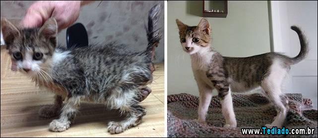 gatos-antes-e-depois-08