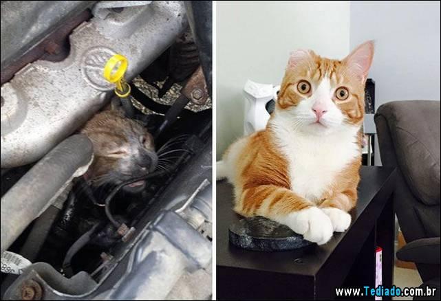 gatos-antes-e-depois-11