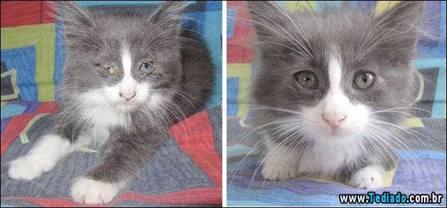 gatos-antes-e-depois-12