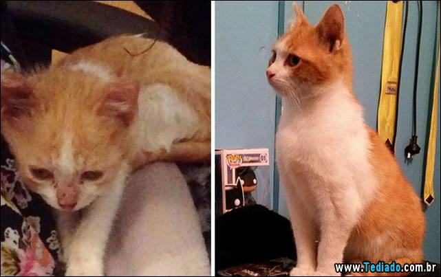gatos-antes-e-depois-13