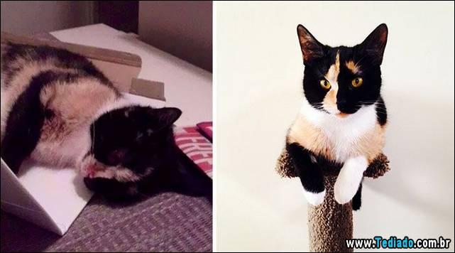 gatos-antes-e-depois-15