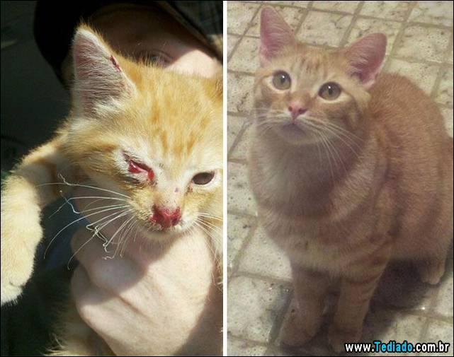 gatos-antes-e-depois-16