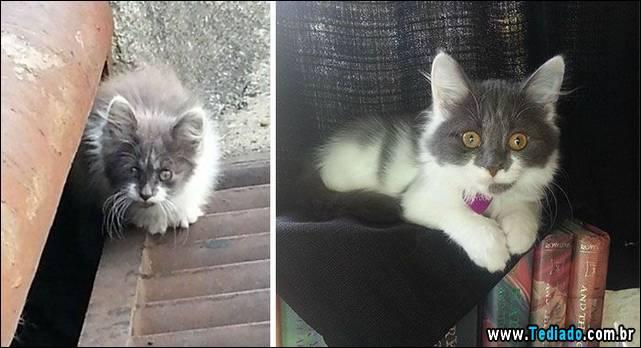 gatos-antes-e-depois-17