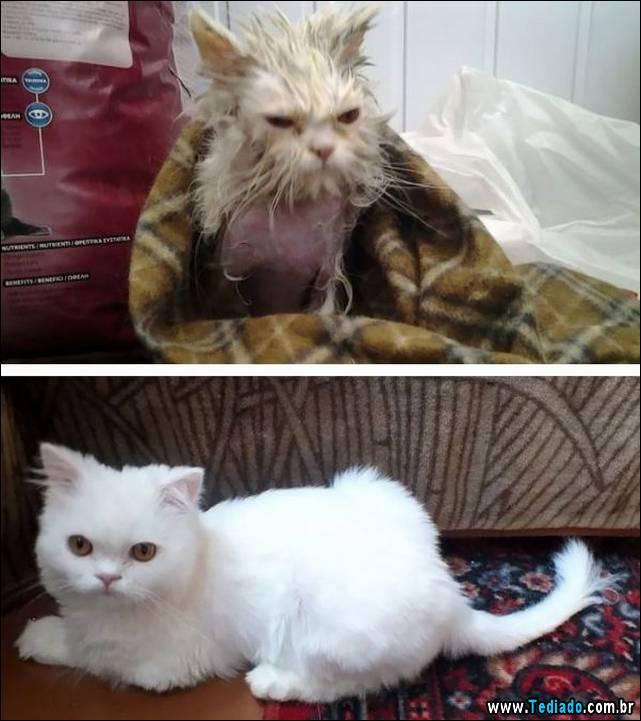 gatos-antes-e-depois-20