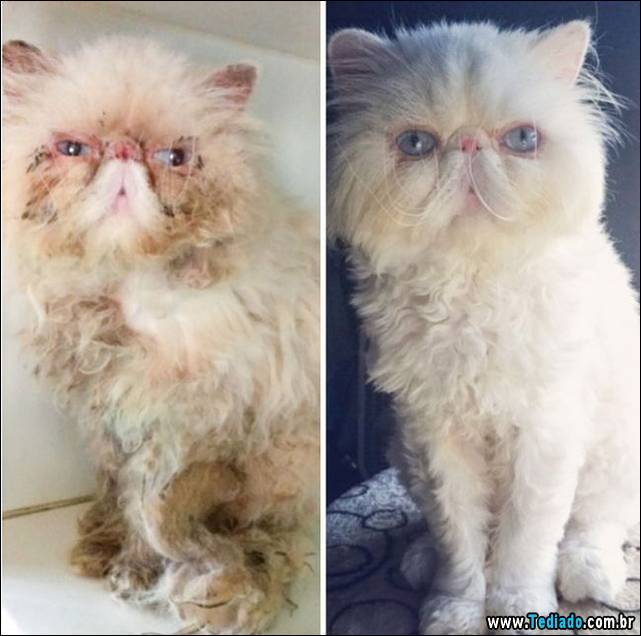 gatos-antes-e-depois-21