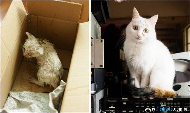 gatos-antes-e-depois-22