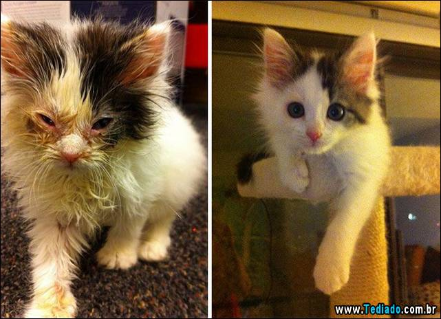 gatos-antes-e-depois-23