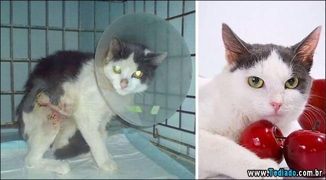 gatos-antes-e-depois-27