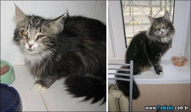gatos-antes-e-depois-28