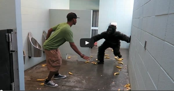 Pegadinha: Escape do gorila no banheiro 2