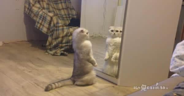 A vida chata de um gato doméstico 3