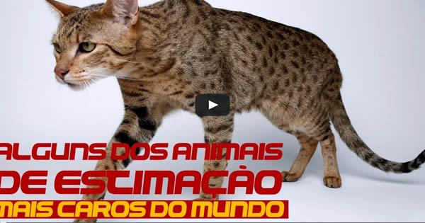 Alguns dos animais domésticos mais caros do mundo 31