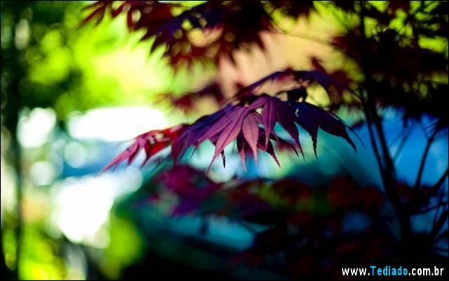 belas-fotos-37