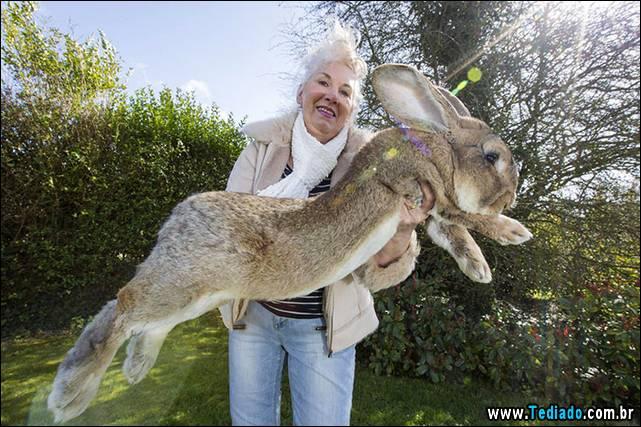 maior-coelho-do-mundo-060