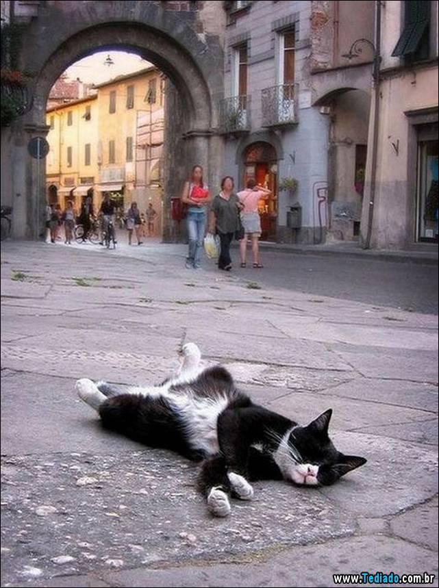 selo-dorminhoco-gato-06