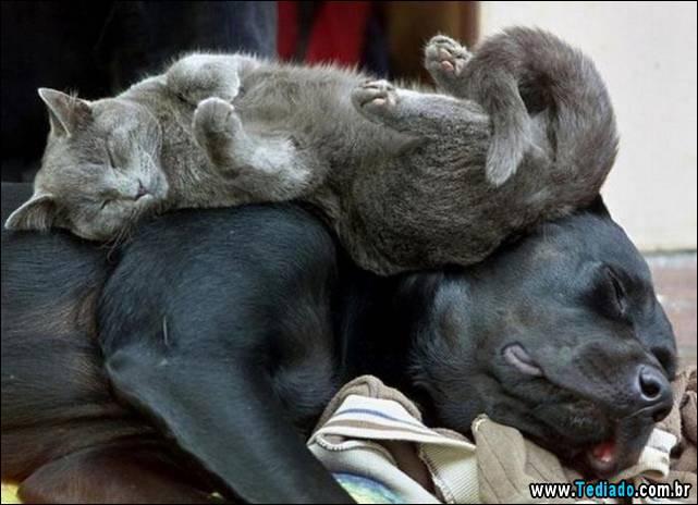 selo-dorminhoco-gato-07