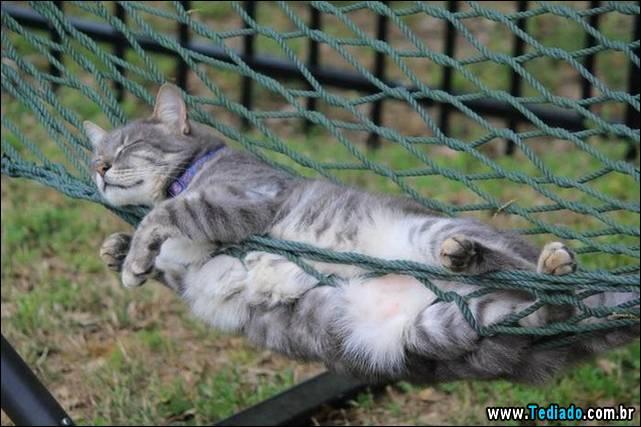 selo-dorminhoco-gato-08