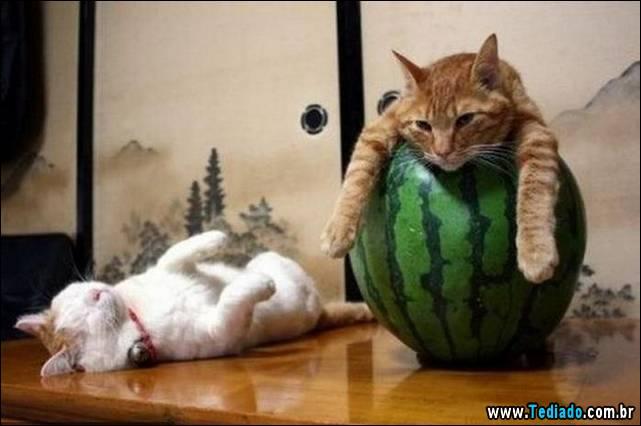 selo-dorminhoco-gato-09