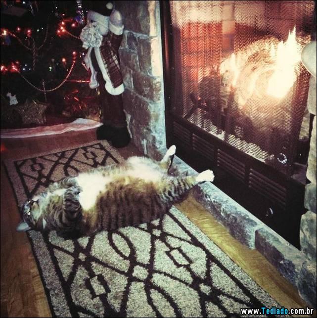 selo-dorminhoco-gato-10