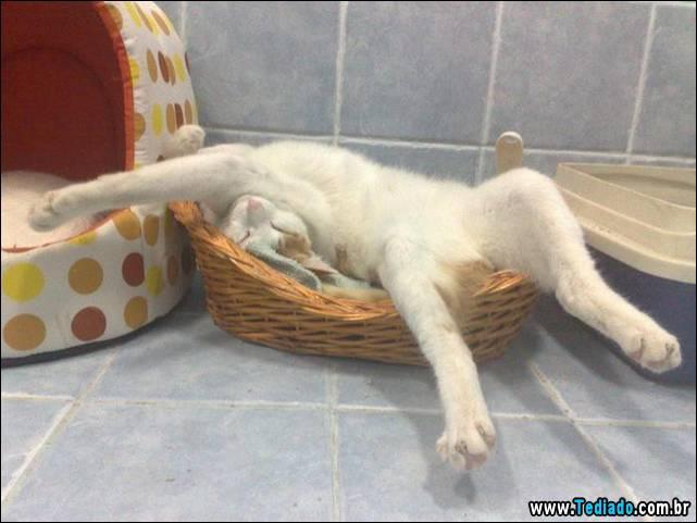 selo-dorminhoco-gato-11