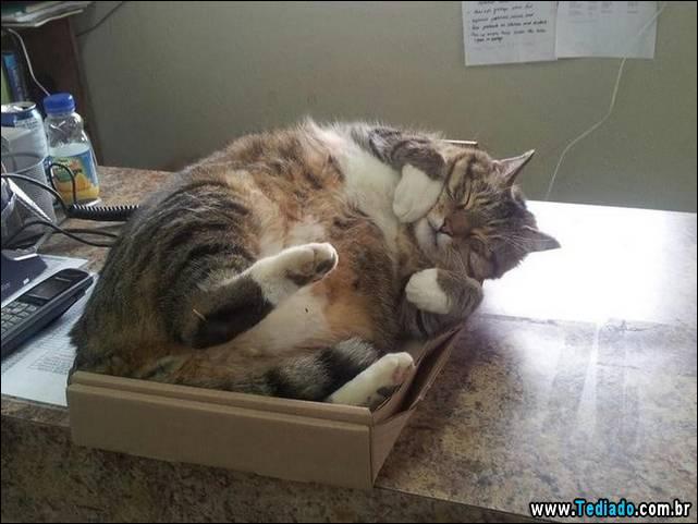 selo-dorminhoco-gato-12
